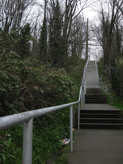 Maple School Ravine   Year of Seattle Parks