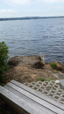 Waterfront Year Of Seattle Parks